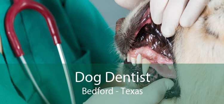 Dog Dentist Bedford - Texas