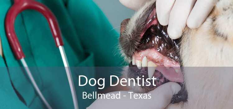Dog Dentist Bellmead - Texas