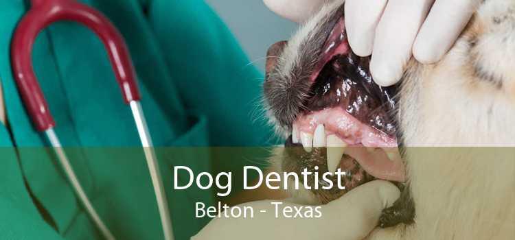 Dog Dentist Belton - Texas