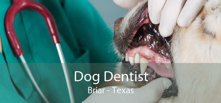 Dog Dentist Briar - Texas