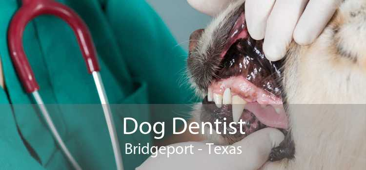 Dog Dentist Bridgeport - Texas