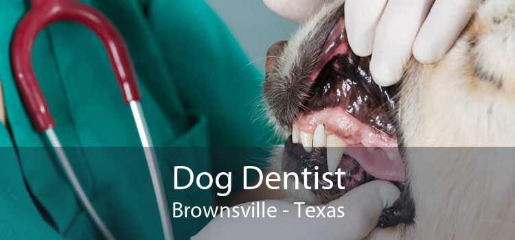 Dog Dentist Brownsville - Texas