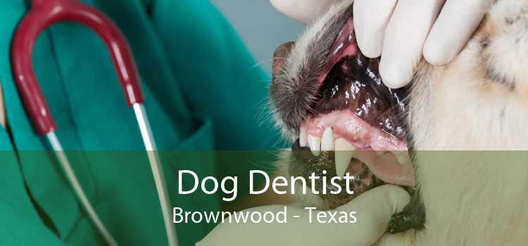 Dog Dentist Brownwood - Texas