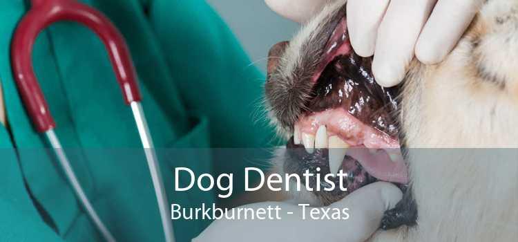 Dog Dentist Burkburnett - Texas
