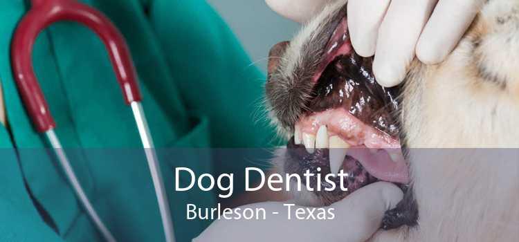 Dog Dentist Burleson - Texas