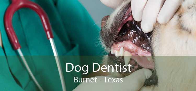 Dog Dentist Burnet - Texas