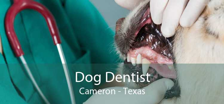 Dog Dentist Cameron - Texas