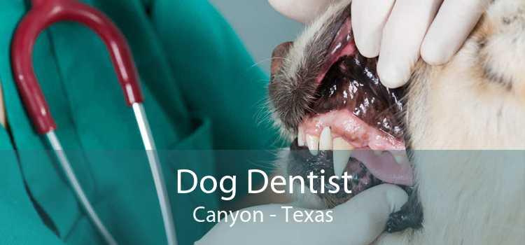 Dog Dentist Canyon - Texas