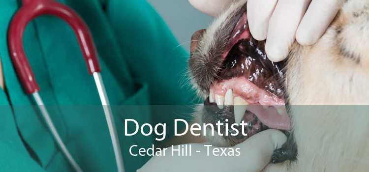 Dog Dentist Cedar Hill - Texas