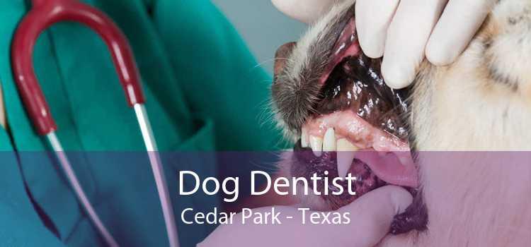 Dog Dentist Cedar Park - Texas
