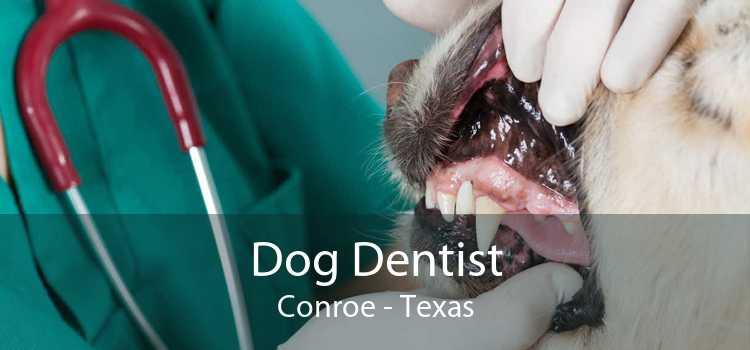 Dog Dentist Conroe - Texas