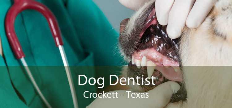 Dog Dentist Crockett - Texas