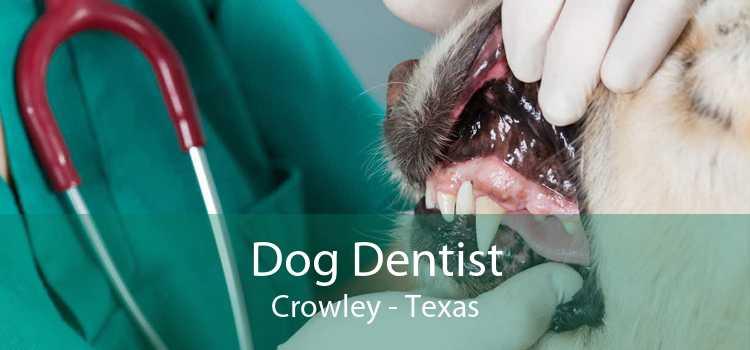 Dog Dentist Crowley - Texas