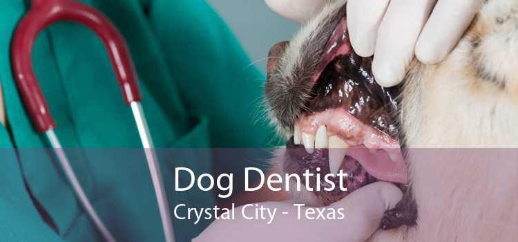 Dog Dentist Crystal City - Texas