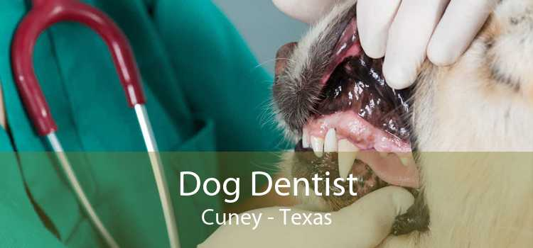 Dog Dentist Cuney - Texas