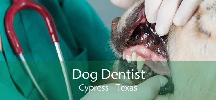 Dog Dentist Cypress - Texas
