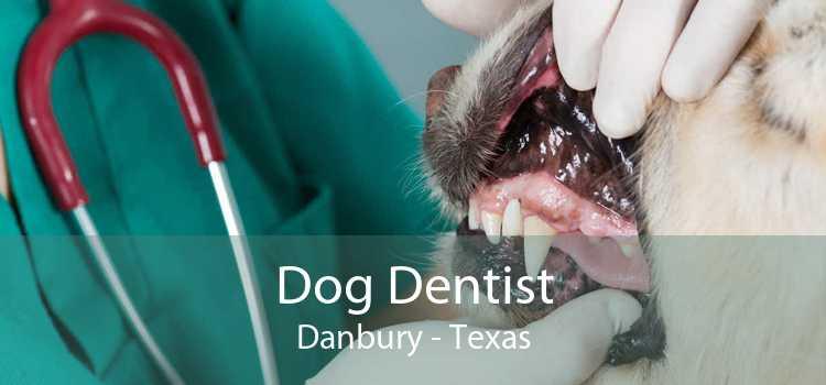 Dog Dentist Danbury - Texas