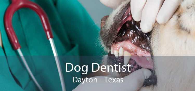 Dog Dentist Dayton - Texas