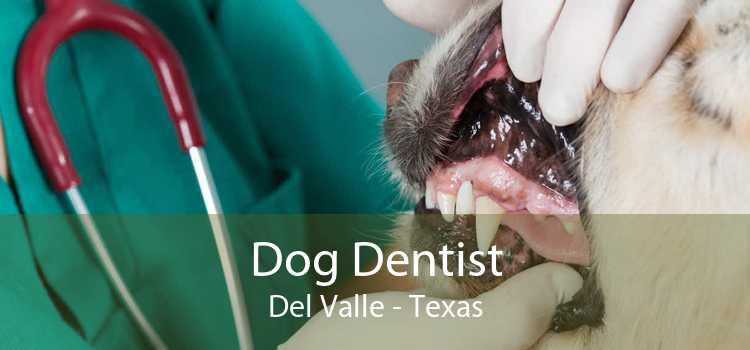 Dog Dentist Del Valle - Texas