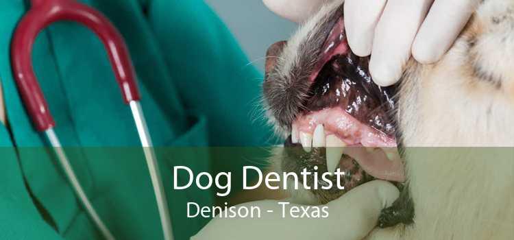 Dog Dentist Denison - Texas