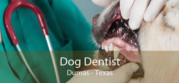 Dog Dentist Dumas - Texas