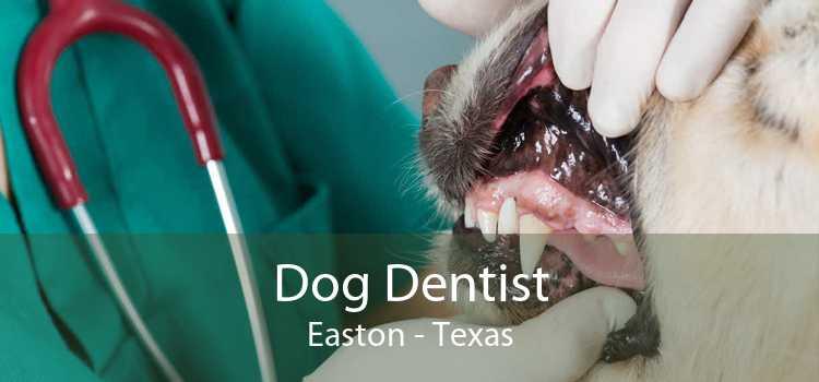 Dog Dentist Easton - Texas