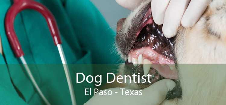 Dog Dentist El Paso - Texas
