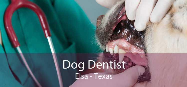 Dog Dentist Elsa - Texas