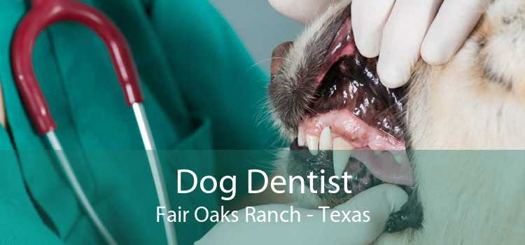 Dog Dentist Fair Oaks Ranch - Texas