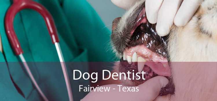 Dog Dentist Fairview - Texas