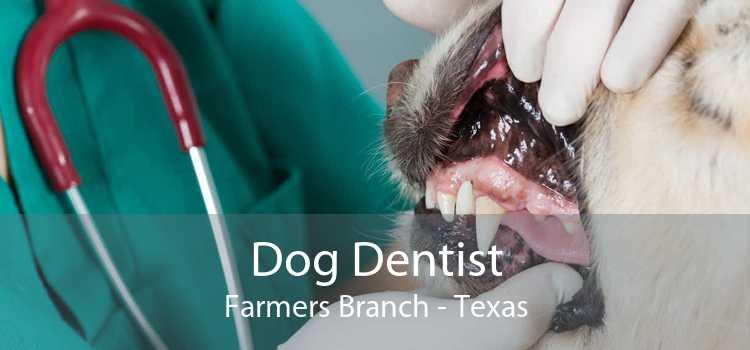Dog Dentist Farmers Branch - Texas