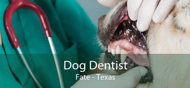 Dog Dentist Fate - Texas