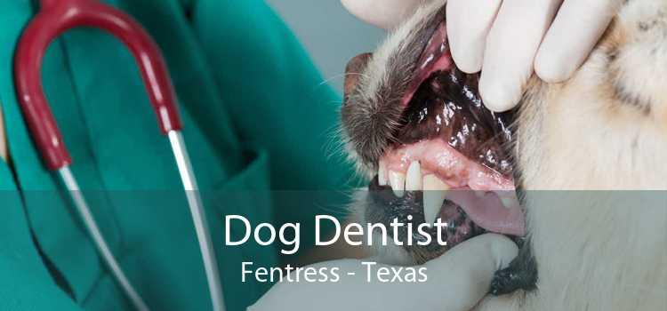 Dog Dentist Fentress - Texas