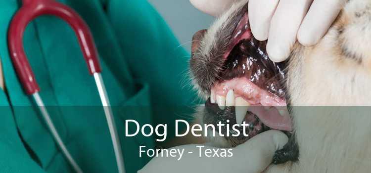 Dog Dentist Forney - Texas