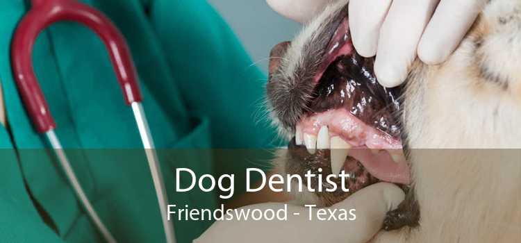 Dog Dentist Friendswood - Texas