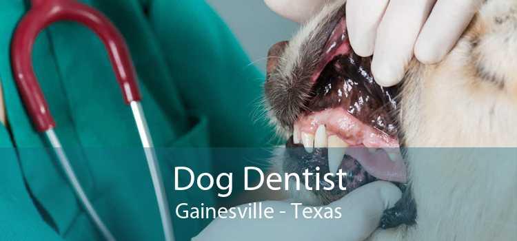Dog Dentist Gainesville - Texas