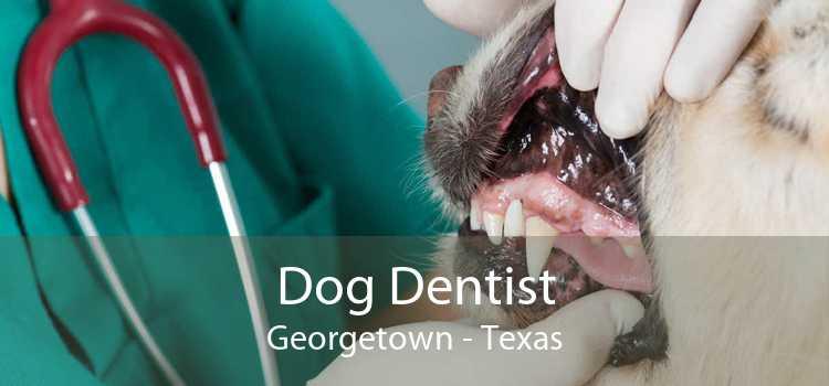 Dog Dentist Georgetown - Texas