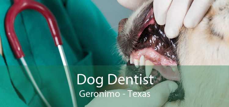 Dog Dentist Geronimo - Texas
