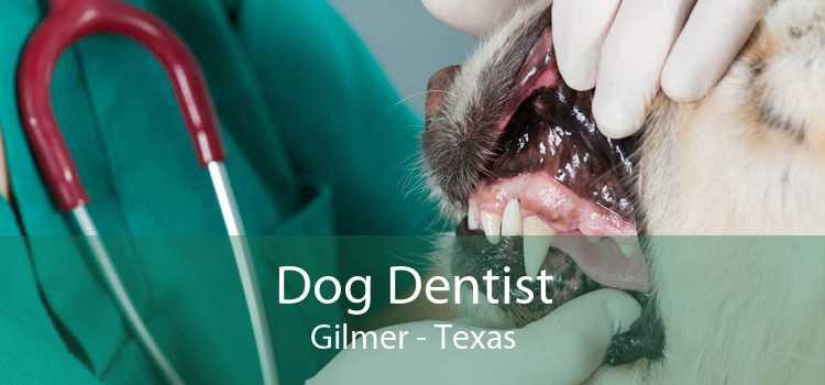 Dog Dentist Gilmer - Texas