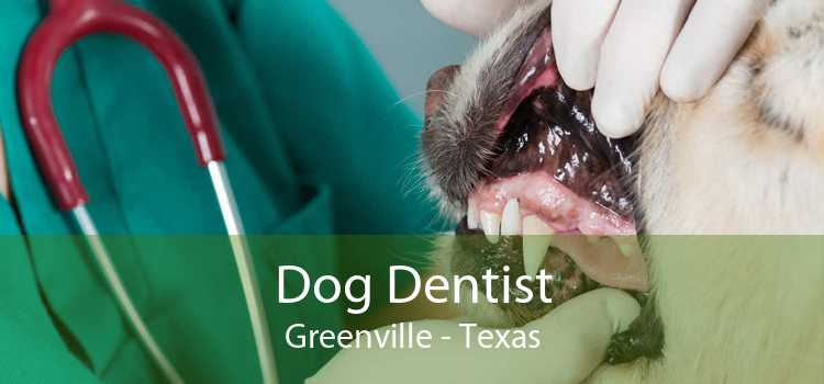Dog Dentist Greenville - Texas