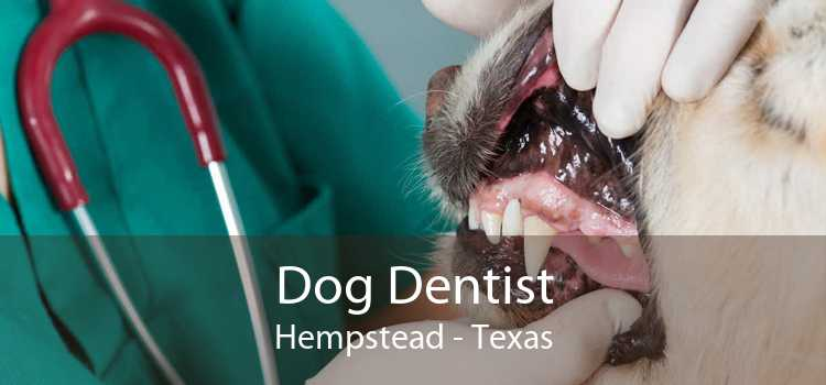 Dog Dentist Hempstead - Texas