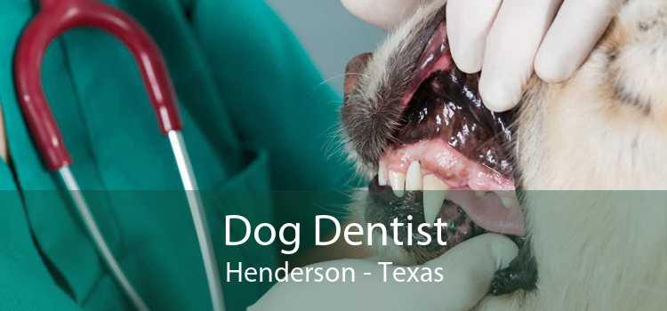 Dog Dentist Henderson - Texas