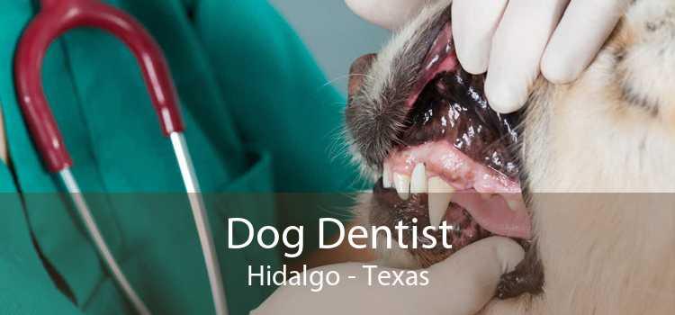 Dog Dentist Hidalgo - Texas