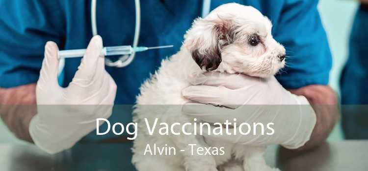 Dog Vaccinations Alvin - Texas