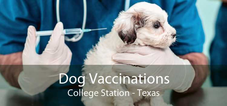 Dog Vaccinations College Station - Texas