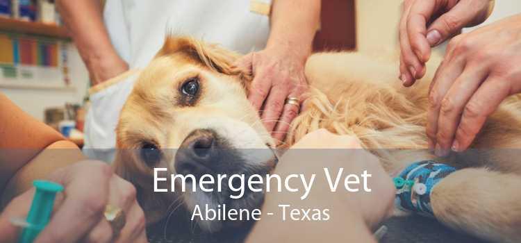 Emergency Vet Abilene - Texas