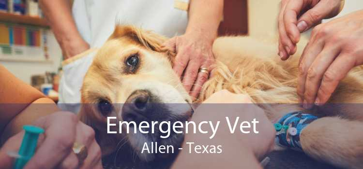 Emergency Vet Allen - Texas