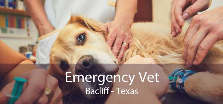 Emergency Vet Bacliff - Texas