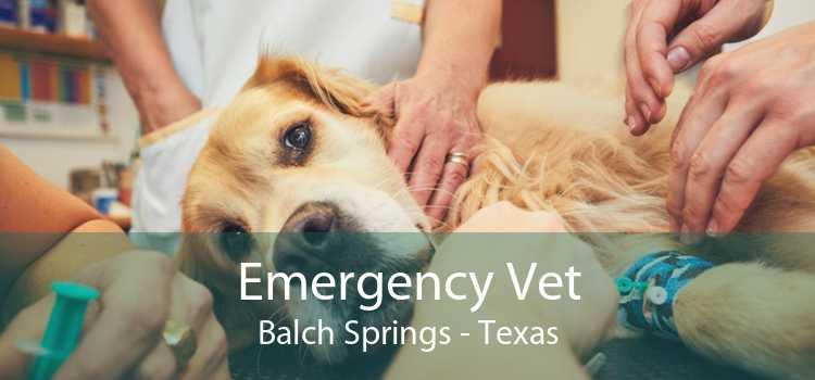 Emergency Vet Balch Springs - Texas
