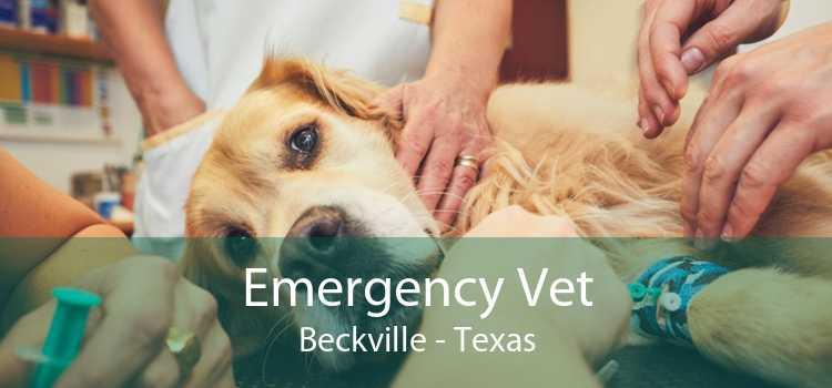 Emergency Vet Beckville - Texas